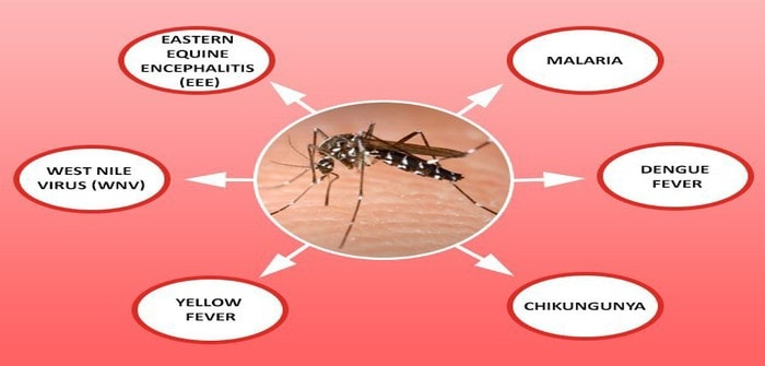 The Most Familiar Diseases which are Caused by Mosquito Bites