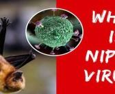 What is Nipah Virus?